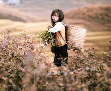 girl_harvester